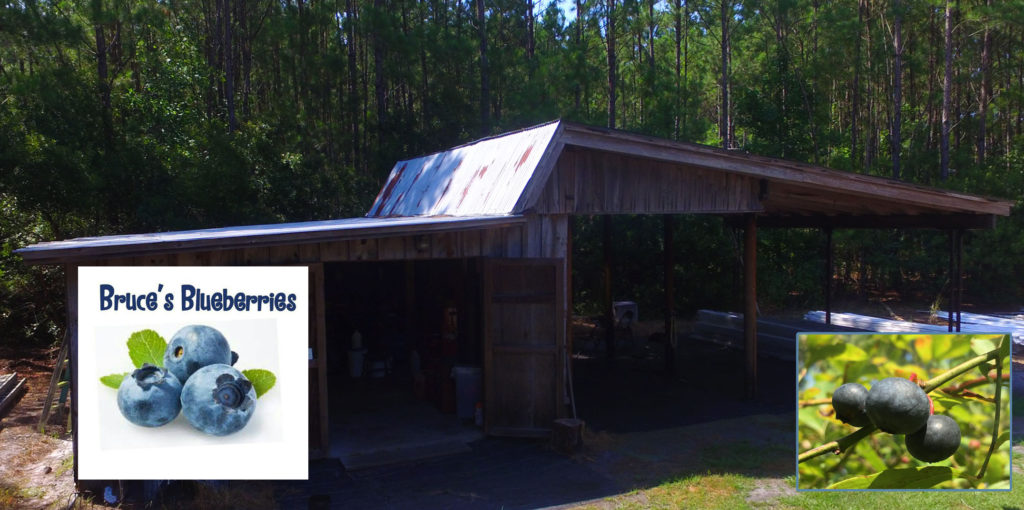 Bruce's Blueberries of Conway Joins the JCP Family